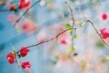 Springtime / by Helen Hughes