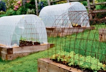 food, not lawns / Why eat poison from a box?  Try growing your own tomato and you won't go back! / by Patti Muma