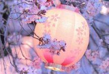 Japanese Elegance / by Helen Hughes