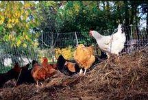 Farm House ideas