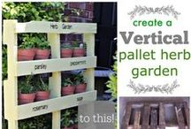 Garden Dreams - Edible Plants / If you dream of a garden full of veggies and fruits...or maybe you long for an apple orchard....or a little container garden on the patio...or fresh herbs all year long that thrive in your kitchen window...you're in the right place.  You'll see an assortment of gardening plans, tips, techniques, ideas, and beautiful photographs to help bring your Garden Dream to fruition in the most healthy, safe, natural, non-toxic way possible.  Glad you dropped by! / by Reecea of Fresh Juniper