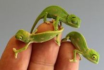 Amazing Wildlife / Awe-inspiring animals big and small that you'll never find at the corner pet shop.  / by Huffington Post