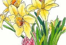 Flower & Nature Art