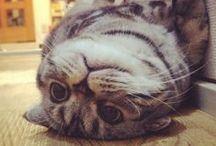 I ♥ Cats