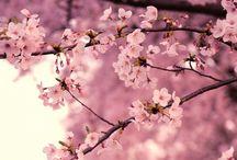 Seasons :: Spring