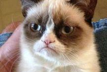 Grumpy!!