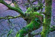 Trees, Woods and TreeMoss..