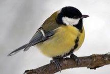 Birds in my garden / Wild birds in the garden