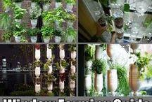 Köksfönstret som köksträdgård / Windowfarm insperation