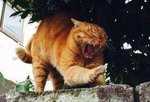 Japan's cats