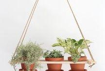 Home - Les suspensions / Plantes et suspensions