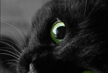 Cats, most beautiful creatures on Earth