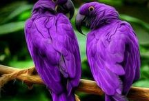 Purple / My fav colour!!!