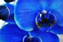 Blue ☆