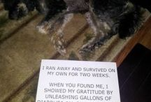 Dogshaming / by Bud Byrd