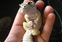 Ящерицы-Iizards / Mеста обитания и виды-  Types