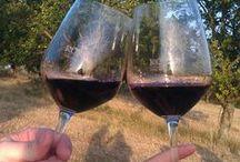 Vinařství Koráb / Koráb Winery (South Moravia) / Moravské vinařství Koráb z Boleradic vyrábí autentická vína ze starých vinic, originální chutí i výrobou.