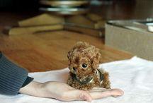 Köpek / Küçücükler
