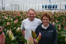 ♥ grown in Holland  / grown with care in Holland & Belgium. With care.