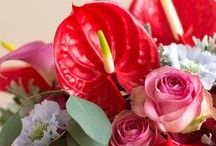 ♥ classic red  / The red Anthurium is nostalgic & famous! Beautiful red.