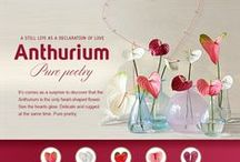 ♥ promotion material / Copy, paste & done. Easy to use promotionmaterial. Perfect for online use, like facebook, twitter, e-mail. Update ever 4-6 weeks.  Also check www.facebook.com/anthurium.info for news updates linked to the e-flyer.