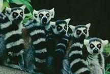 Madagascar - Island Continent Tours DMC