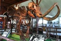 Mastodon Info