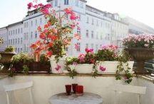 balcony | garden