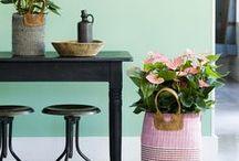 Spring Anthurium