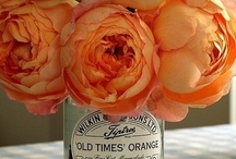 In Full Bloom / by WATC Charlotte