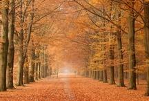 Herfst * Autumn