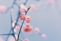 Lente * Spring