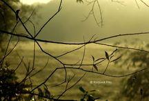 Made by Regina Pas / Foto's gemaakt door Regina Pas
