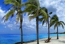 Palm Trees - Mexico / by Ellen Callahan