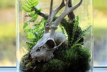 Terrariums, aquariums and related stuff / terrariums, aquariums, vivariums and all nice green stuff for home.