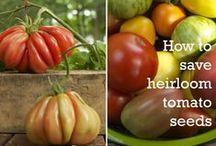 Plant & Grow / gardening tips, homesteading, natural lifestyle tips, organic gardening
