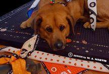 MAJESTIC DOG Design by M.A. MARTIN / Ich suche einen Hersteller und Vertrieb für meine kleine Hundekollektion - Halsband, Tücher, Kissen und Matten  majesticworld@mac.com -  Frau M. A. MARTIN