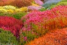 Fabulous Color!