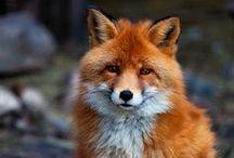PHOTO - Animals, Wildlife