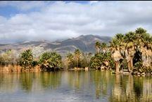 Arizona / by Charles Leech