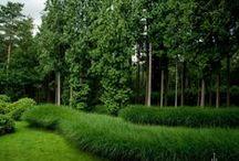 Foliage Gardens / Gardens Foliage Evergreen