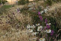 Large Landscapes / Planting design for large gardens