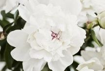 Flower Shower / by Peony In White