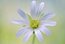 Flowers / by Enas Teirab