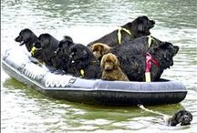 Amazing World of Working Dogs / Working hard and making a difference.
