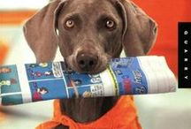 Activites To Do With Your Pet / Organized and disordered fun sports and activities to share with your dog (or cat?).