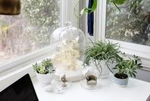 garden & plant.