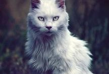 Felins♥