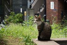 Cats / by shun ikeda