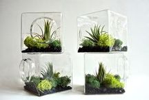 Jardim/ Plantas - decoração / ... decoração com plantas, jardins, inspirações para futuros projectos (?)...
